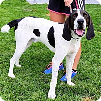 Adopt A Pet :: Porter Rockwell - Sacramento area, CA