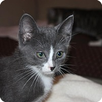 Adopt A Pet :: Hillary (LE) - Little Falls, NJ