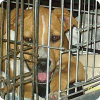 Adopt A Pet :: Blaze - Mexia, TX