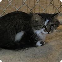 Adopt A Pet :: Lori - Geneseo, IL