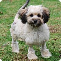 Adopt A Pet :: BHODI - Los Angeles, CA