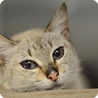 Adopt A Pet :: Kennedy160067 - Atlanta, GA