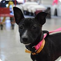 Adopt A Pet :: Luna $250 - Seneca, SC