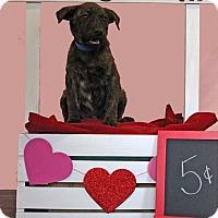 Adopt A Pet :: Vic - Waldorf, MD