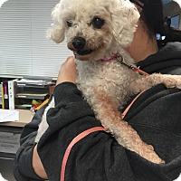 Adopt A Pet :: Ruthie - Bristol, CT