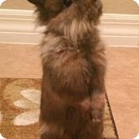 Adopt A Pet :: Chip - Williston, FL