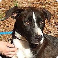 Adopt A Pet :: Mr. Love Bug - Locust Fork, AL