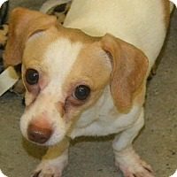 Adopt A Pet :: Boone - Andalusia, PA