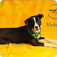 Adopt A Pet :: Victor - Topeka, KS
