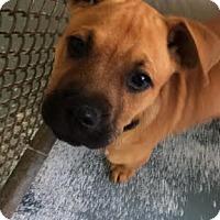 Adopt A Pet :: Jell-o - San Francisco, CA