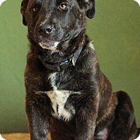 Adopt A Pet :: Gator - Waldorf, MD