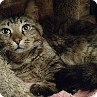 Adopt A Pet :: Benjamin - Wakinsville, GA