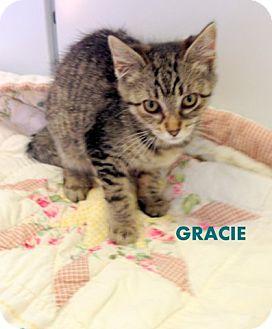 Domestic Mediumhair Kitten for adoption in Mountain View, Arkansas - Gracie