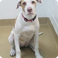 Adopt A Pet :: Lily - Miami, FL