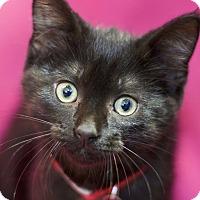 Adopt A Pet :: Stella - Sioux Falls, SD