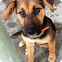 Adopt A Pet :: Lisa - Edisto Island, SC