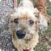 Adopt A Pet :: Colin is the NICEST dog! - Los Angeles, CA