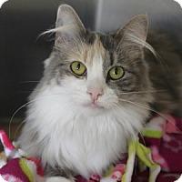 Adopt A Pet :: Allie - Naperville, IL