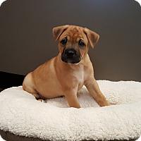 Adopt A Pet :: Dansby - Atlanta, GA