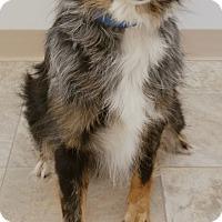Adopt A Pet :: Charlotte - Urbana, OH