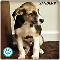 Adopt A Pet :: Sanders - Kimberton, PA