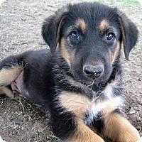Adopt A Pet :: Poldark * ADOPTED * - Trenton, NJ
