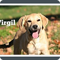 Adopt A Pet :: Virgil * Adoption Pending * - Marion, KY