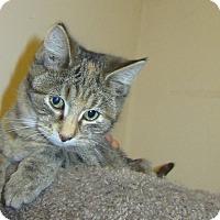 Adopt A Pet :: Hollin - Rochester, MN