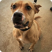 Adopt A Pet :: Snickers - Richmond, VA