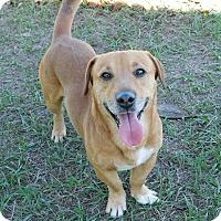 Adopt A Pet :: Choby - Lake Panasoffkee, FL
