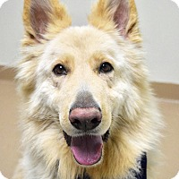 Adopt A Pet :: Oso - Dublin, CA