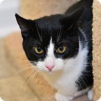 Adopt A Pet :: Batgirl - Davis, CA