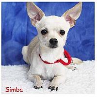 Adopt A Pet :: Simba - South Bend, IN