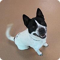 Adopt A Pet :: Zip - Norwalk, CT