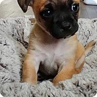 Adopt A Pet :: Fillipo aka Filly - West Palm Beach, FL