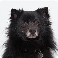 Adopt A Pet :: Valentino - San Luis Obispo, CA