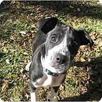 Adopt A Pet :: Snoopy - Brunswick, GA