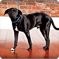 Adopt A Pet :: Blackie - Owensboro, KY