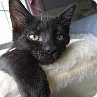 Adopt A Pet :: Austin - Colmar, PA