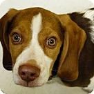 Adopt A Pet :: Pending! Billy Bob