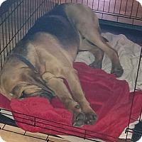 Adopt A Pet :: Cooper - Fayetteville, AR