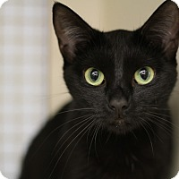 Adopt A Pet :: Boo - Richmond, VA