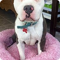 Adopt A Pet :: Mia - Inglewood, CA