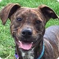 Adopt A Pet :: ***COURTESY LISTING****  Nori - Minneapolis, MN