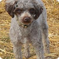 Adopt A Pet :: Forbes - Prole, IA