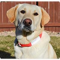 Adopt A Pet :: Okay - Broomfield, CO