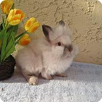 Adopt A Pet :: Fluff - Bonita, CA