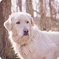 Adopt A Pet :: Blondie - Lewisville, IN