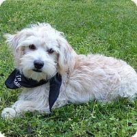 Adopt A Pet :: Prince - Mocksville, NC