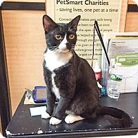 Adopt A Pet :: Jonah - Albany, NY